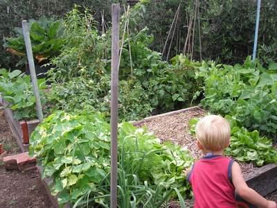 Making Your Garden Kid Friendly